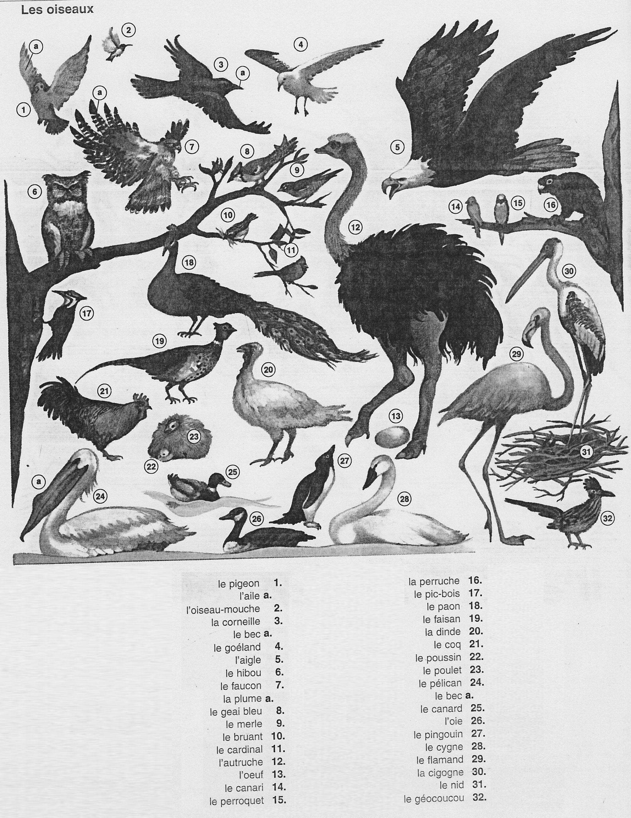 Le paon, l'autruche, et les poulets - deridet.com