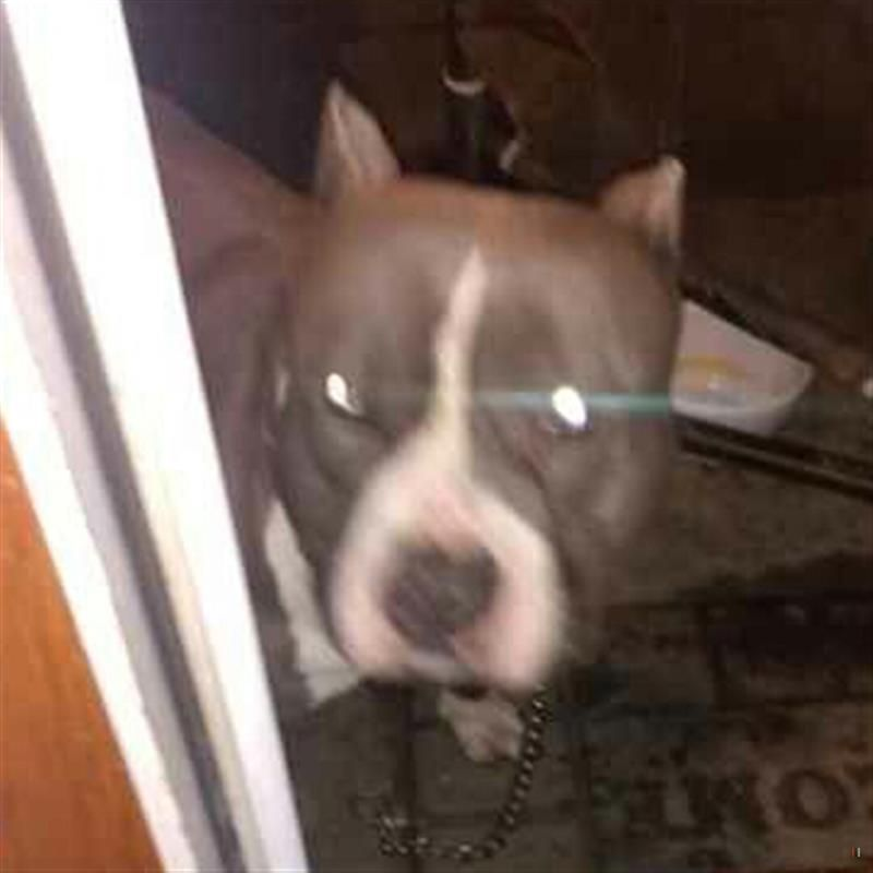 Found Dog Columbus Oh Usa 43223 On December 28 2018 12 00 Pm Pet Home Lost Found Dogs