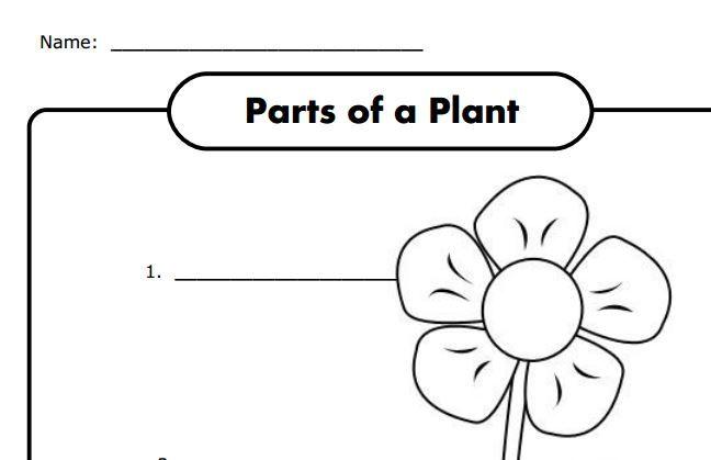 parts of a plant worksheet for k free spring plants kindergarten science planting for. Black Bedroom Furniture Sets. Home Design Ideas
