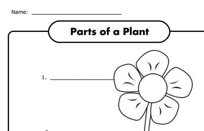 parts of a plant worksheet for k free science pinterest science worksheets and plants. Black Bedroom Furniture Sets. Home Design Ideas