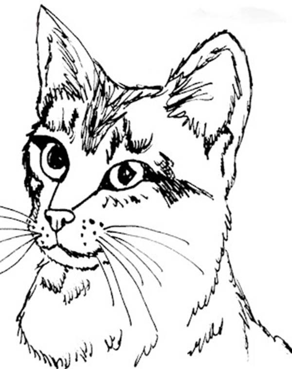 Realistis Kitty Cat Head Figure Coloring Page Kids Play Color