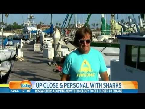 Karl Stefanovic Shark