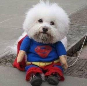 犬用コスプレ衣装スーパーマン1 犬用の服 ハロウィーンの衣装 犬用コート
