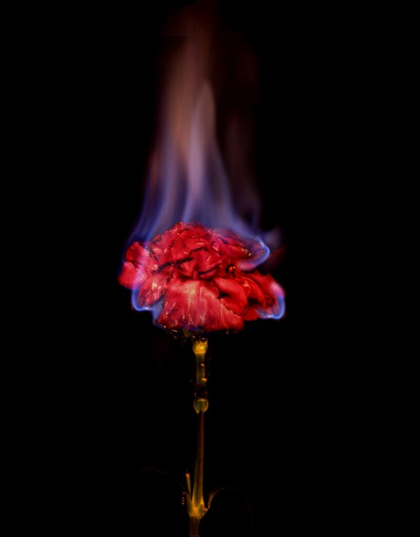 Pin By Kevin Bebout On Art I Like Burning Flowers Fire Flower Flowers Photography