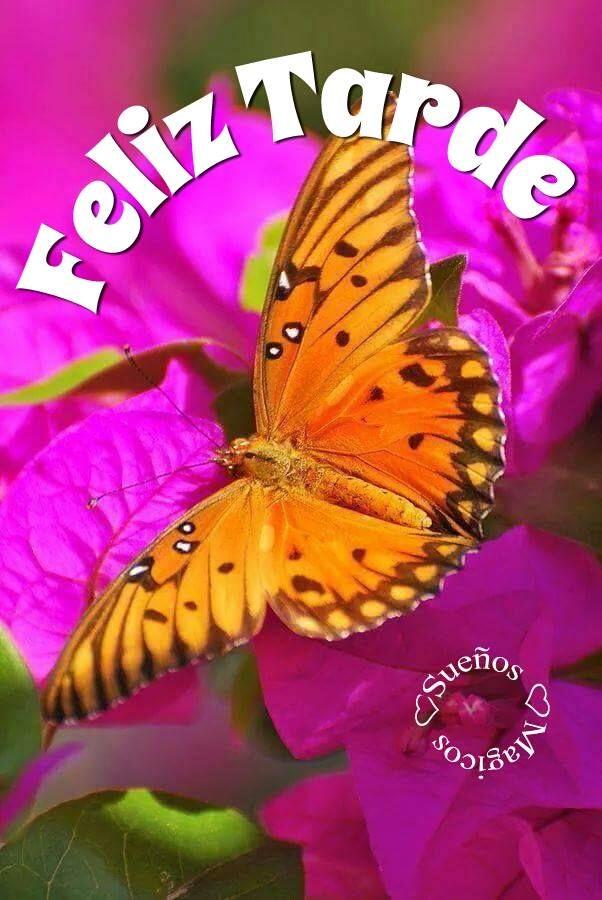 Buenas Tardes Imagen 8722 Feliz Tarde Flores Mariposa
