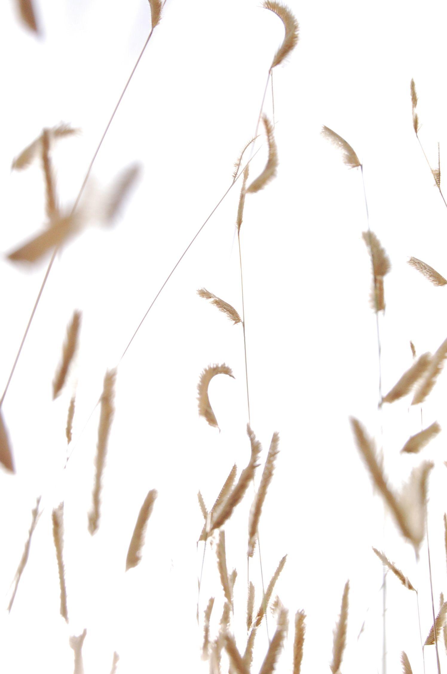O'er amber fields of grain