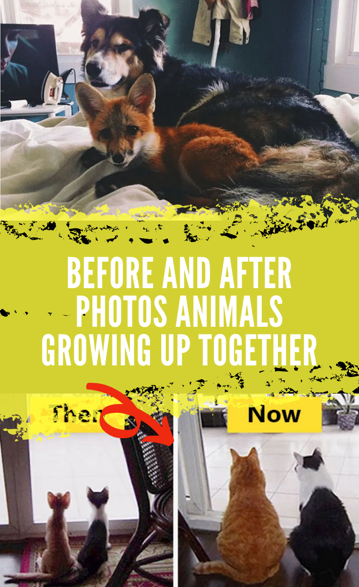 Before And After Photos Animals Growing Up Together In 2020 Food Recipes Animal Photo