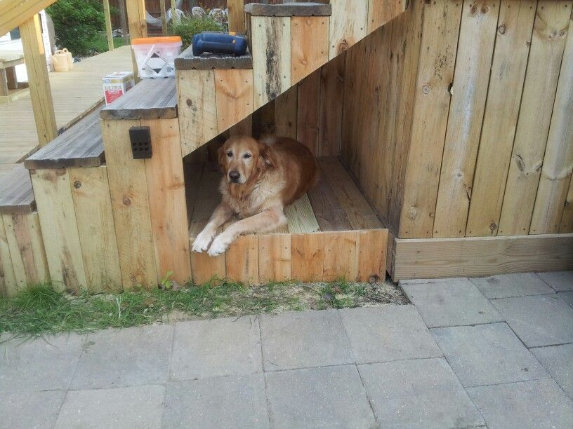 Dog House Under Stairway Use Outside Shade For Pet Golden