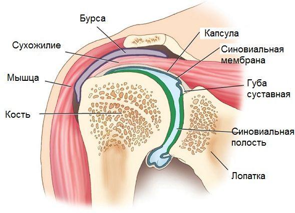 Альтернативное лечение остеопороза
