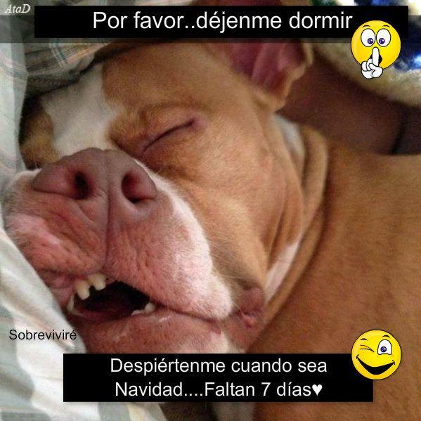 Pizap By Ximena Alexandra Mejia Funny Dog Faces Funny Animal Memes Funny Animals