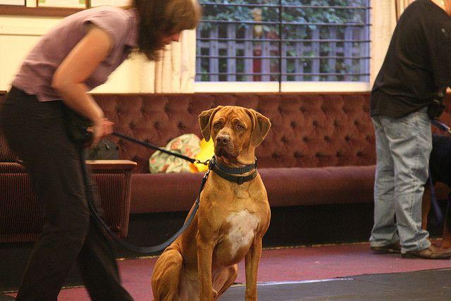 Sarasota Dog Training And Boarding Dog Training Positive Dog