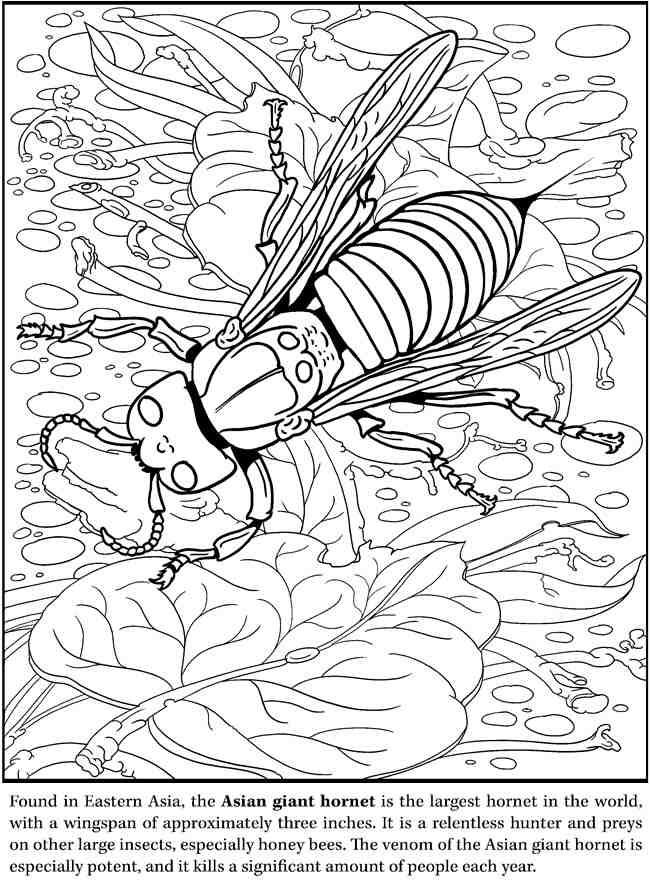Hornet Animal Coloring Pages Dover Coloring Pages Coloring Pages