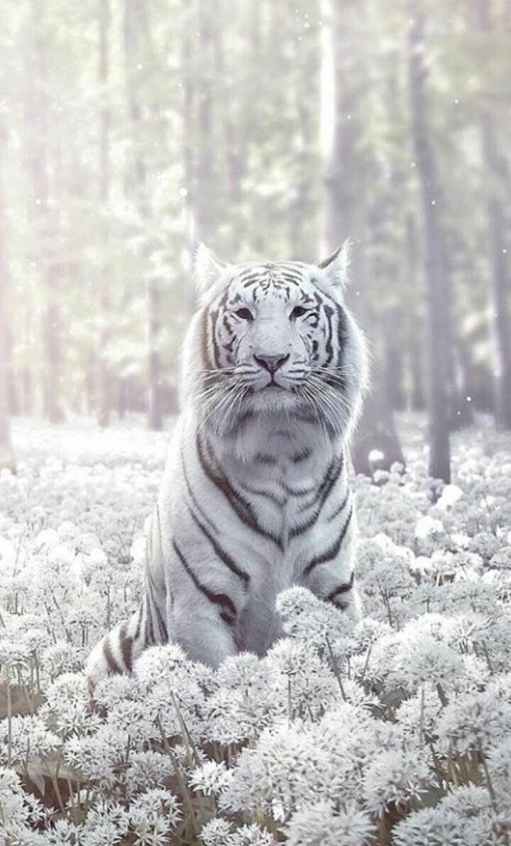 Narasimha Caturdasi Susseste Haustiere Weisse Tiger Ausgestopftes Tier
