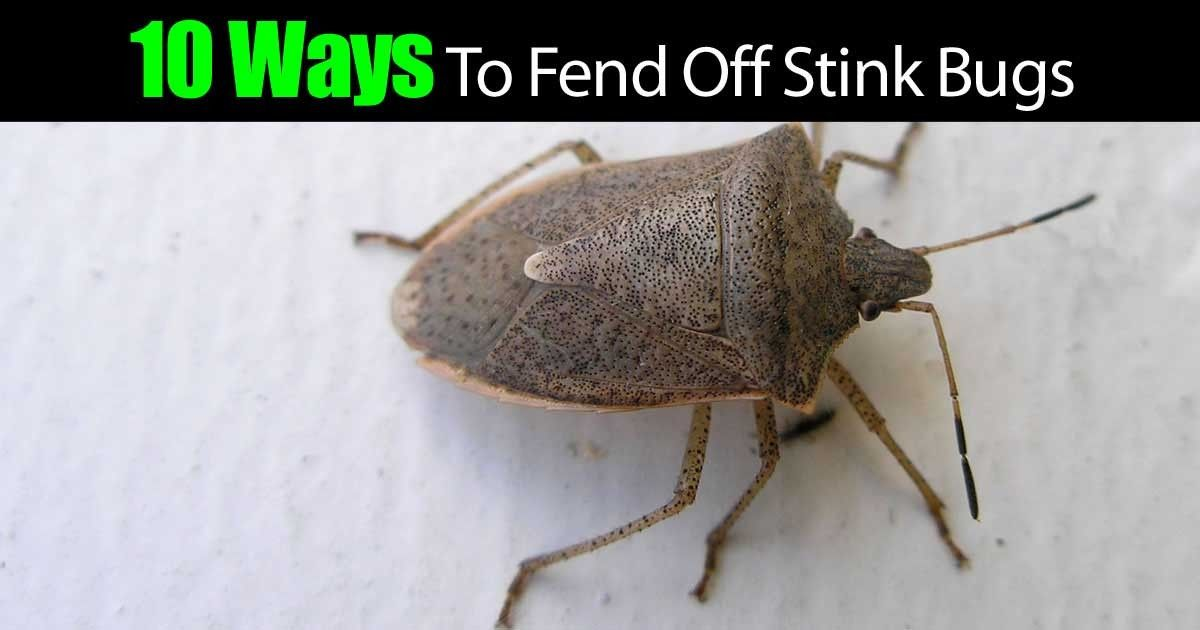 Have you tried these 14 ways to get rid of stink bugs