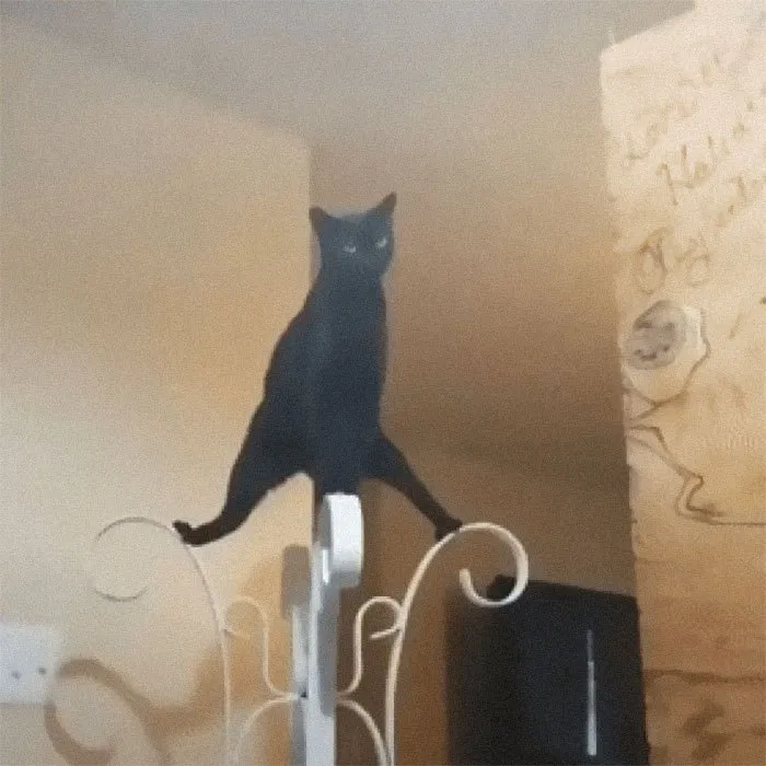 What S Wrong With My Cat Owners Hilarious Pics Of Their Malfunctioning Cats We Love Cats And Kittens Crazy Cats Cats Cat Online