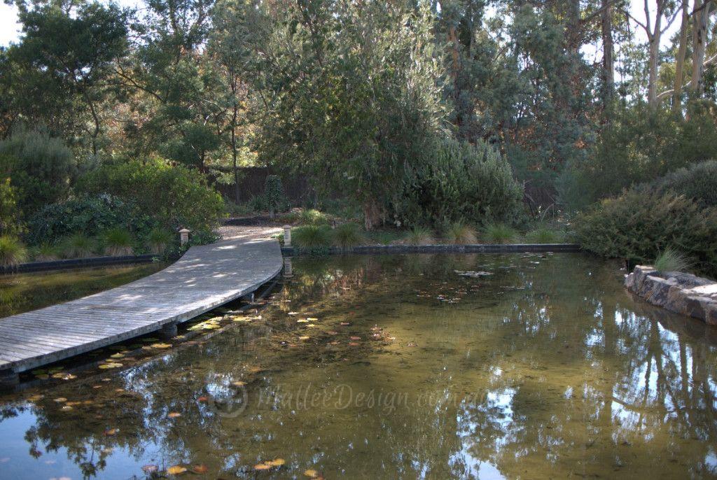 Walcott Garden Canberra Australian Native Gardens Pinterest