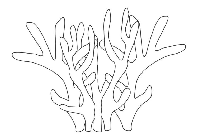 Coloring Page Coral Color Coral