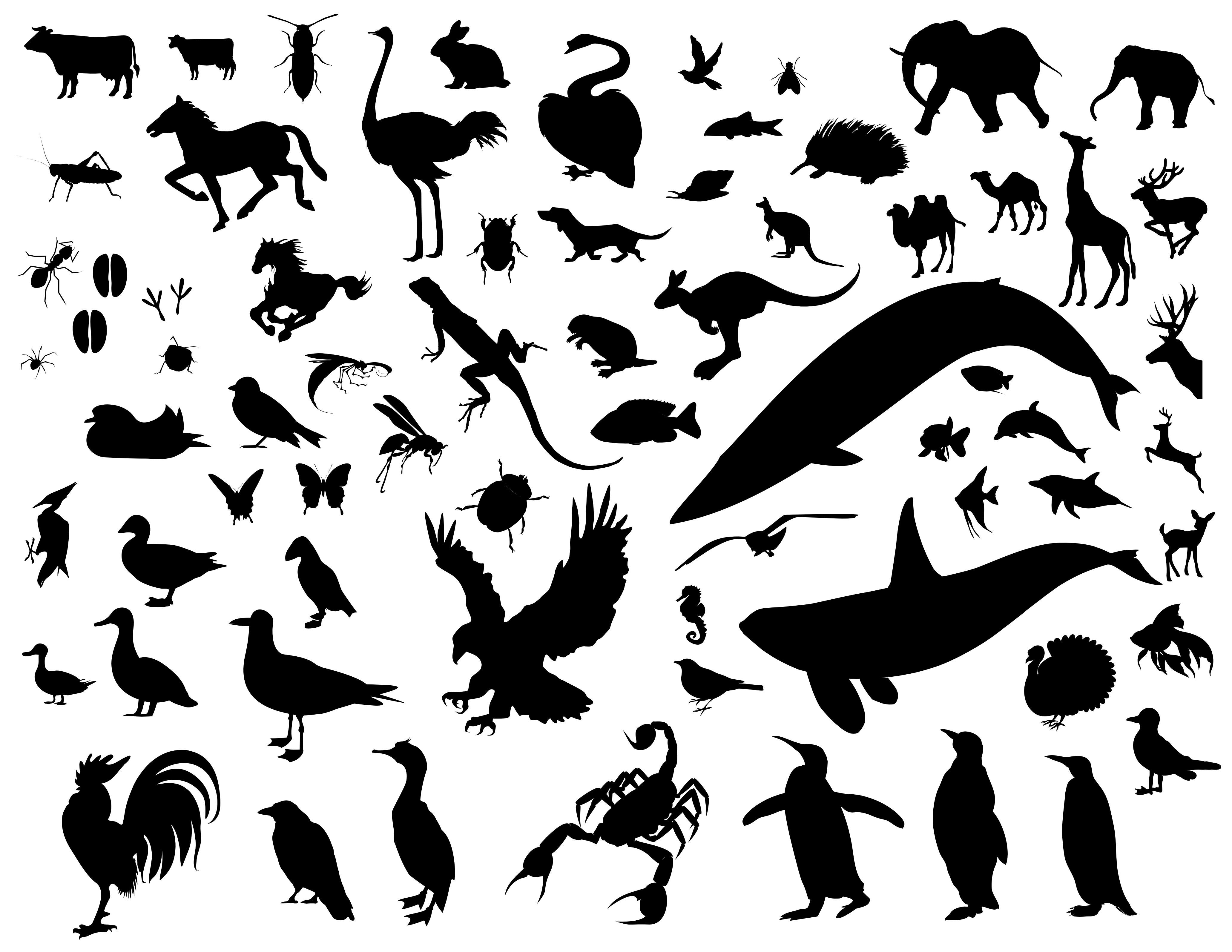 Silhouettes On Pinterest Animal Silhouette Clip Art And