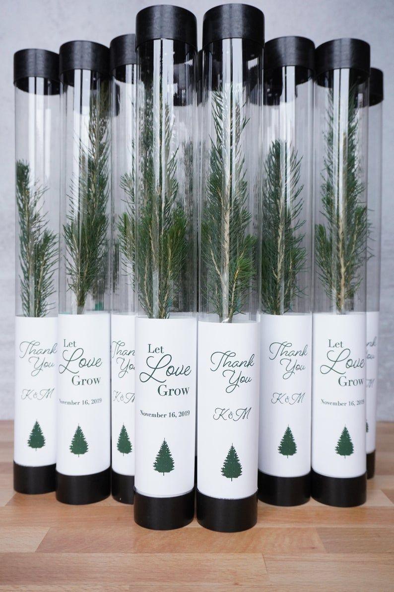 Let Love Grow Wedding Favor | White Pine Seedling