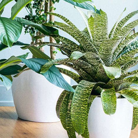 Low Maintenance House Plants For Home Or Office.