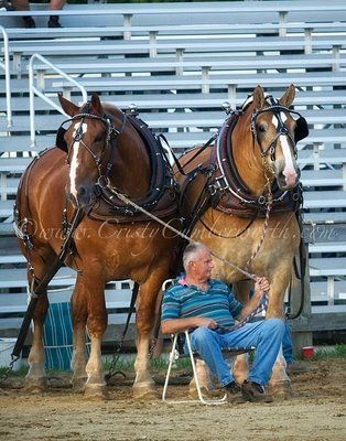 are probably the thickest horses I have ever seen. Pure muscle. Champions in the horse pull.