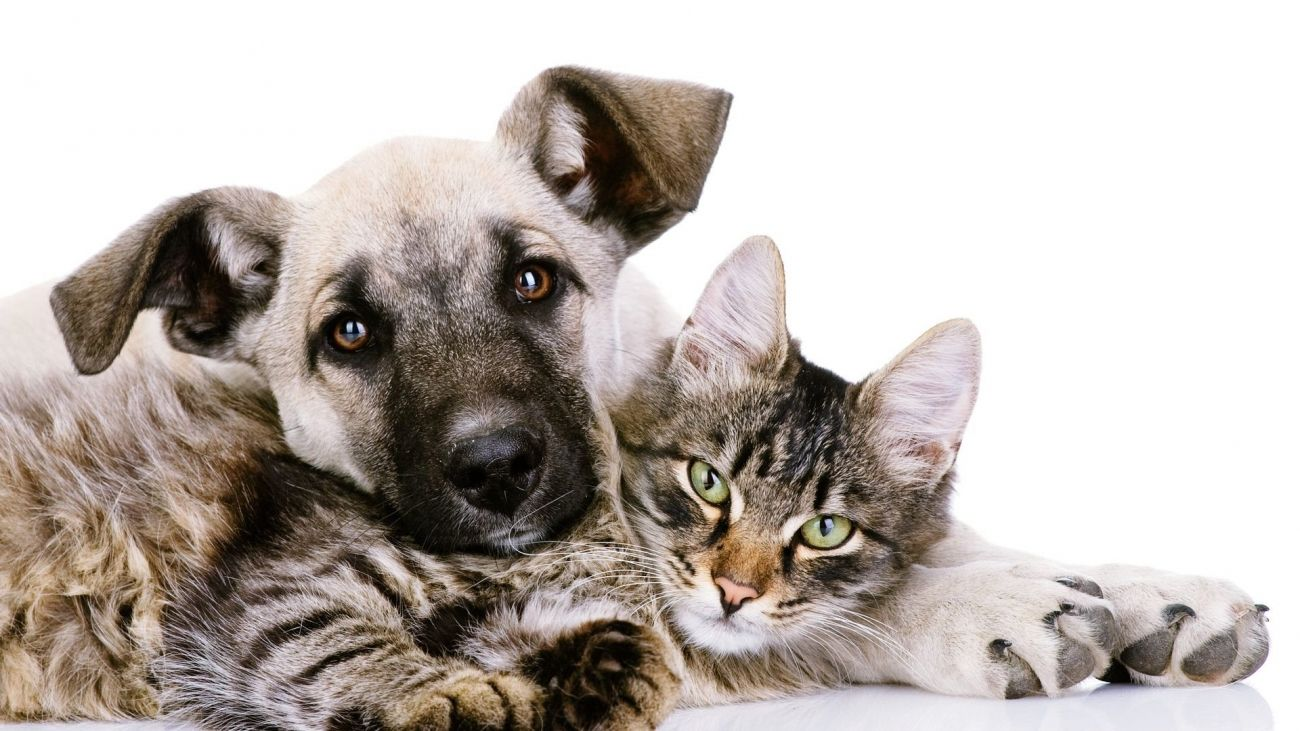 Download Idescreen Cat And Dog Wallpaper High Quality Hd Wallpaper In 2k 4k 5k 8k 10k Resolution For Your Desktop Mobile Android Dog Wallpaper Animals Dog Cat
