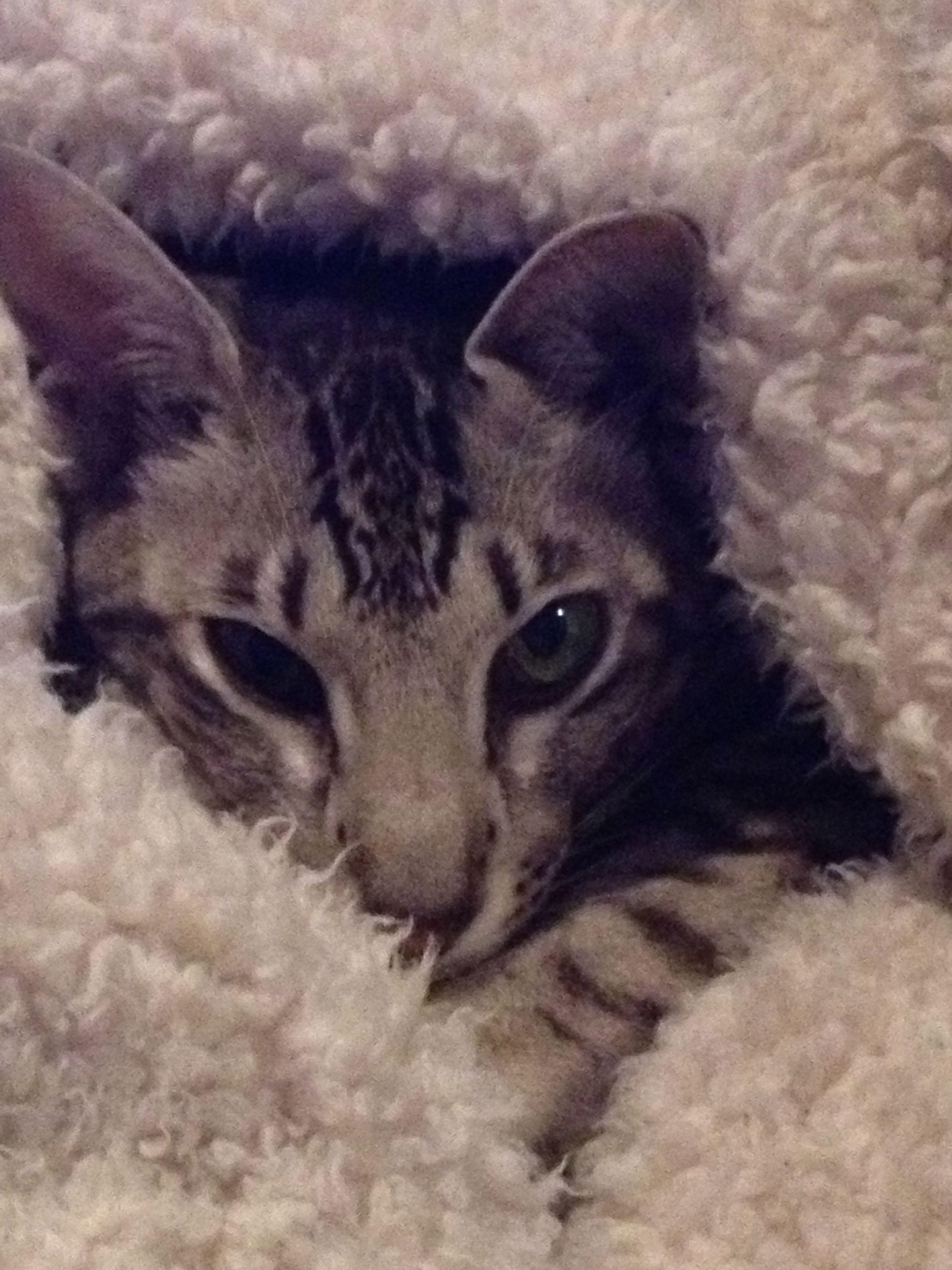 Harlot Cat Pawshake Wellington (met afbeeldingen)