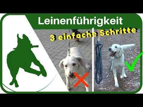 Hundeerziehung Dem Hund In 3 Schritten Das Leine Ziehen Abgewohnen Leinenfuhrigkeit Ganz Einfach Youtube Hundeerziehung Leinenfuhrigkeit Hunde Erziehen