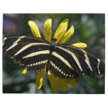 Exotic Butterfly Puzzle