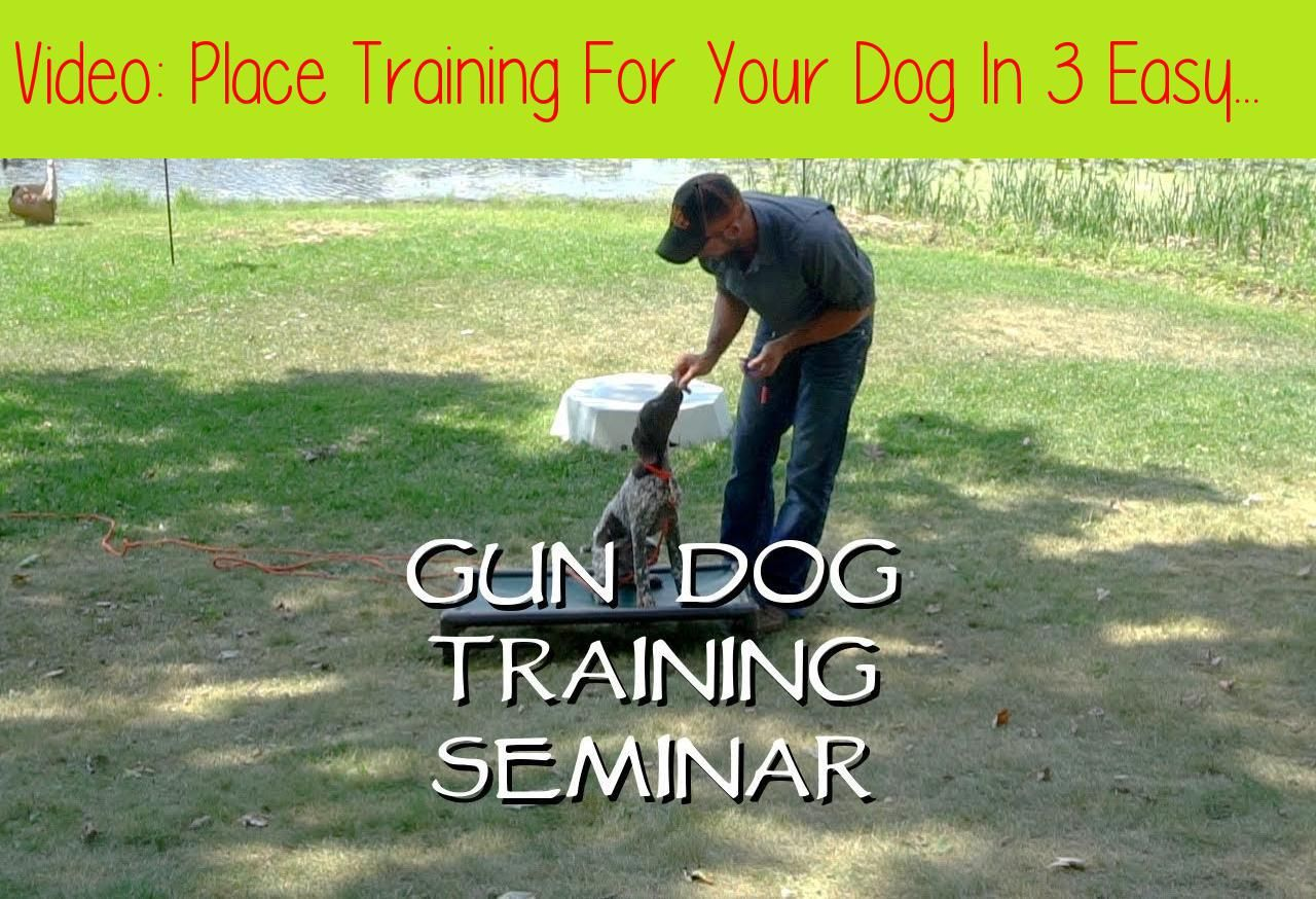 Place Training For Your Dog In 3 Easy Steps Upland Bird Dog