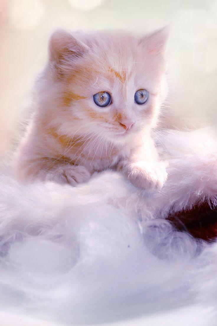 картинки на телефон движущиеся животные кошки
