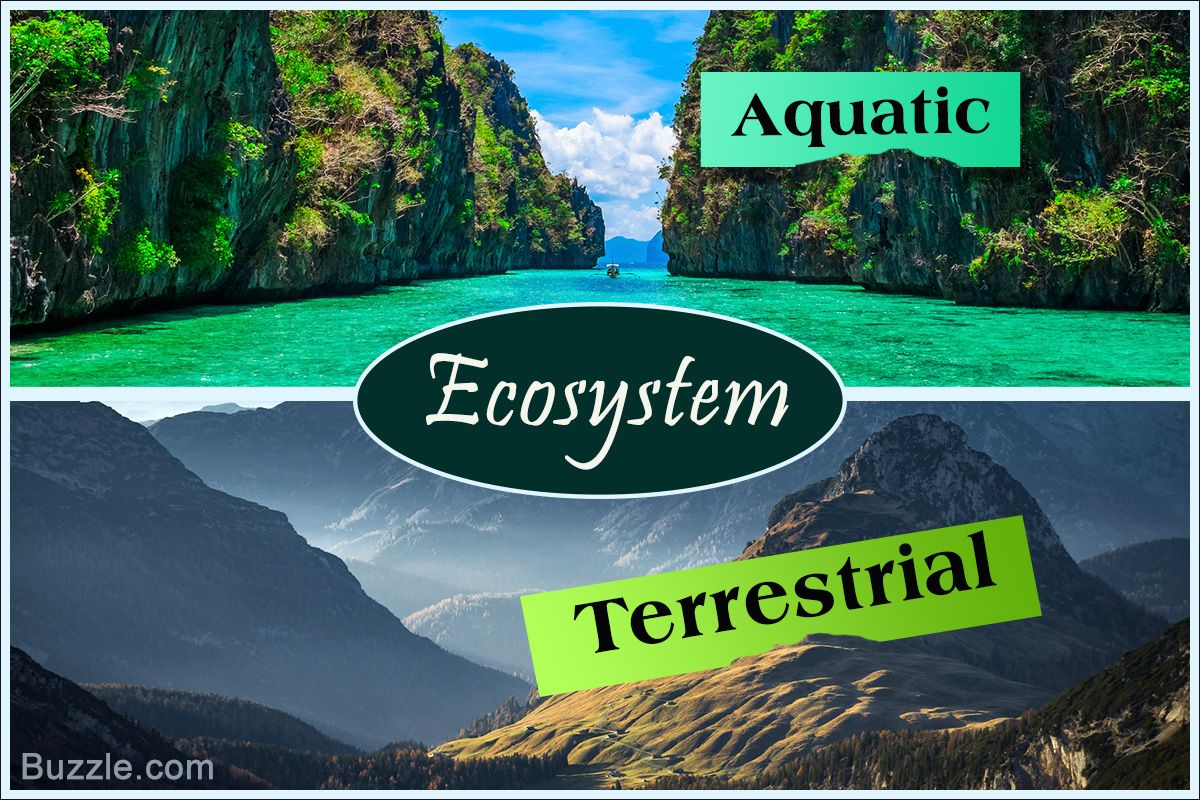 Types Of Environmental Ecosystems