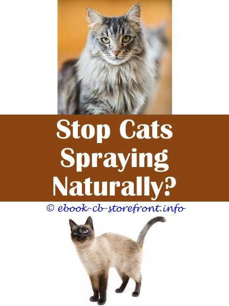9 Humorous Cool Tricks Cats Spraying Territory Lysol Disinfectant Spray Harmful Cats Hydrocortisone Spray Cats How To Get Neutered Cat To Stop Spraying Aerosol