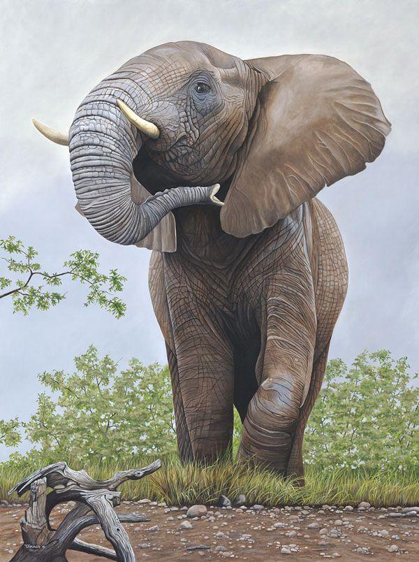 Ed Takacs Animals Wild Big Animals Animals