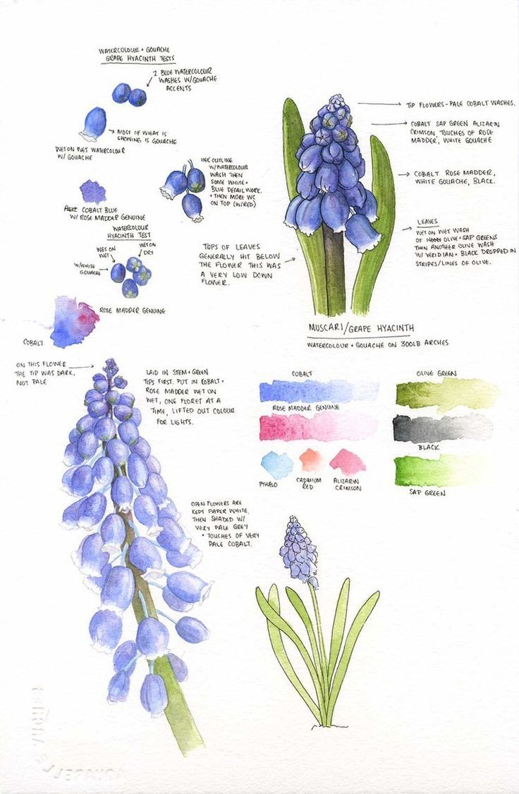 7 planting Sketch botanical ideas