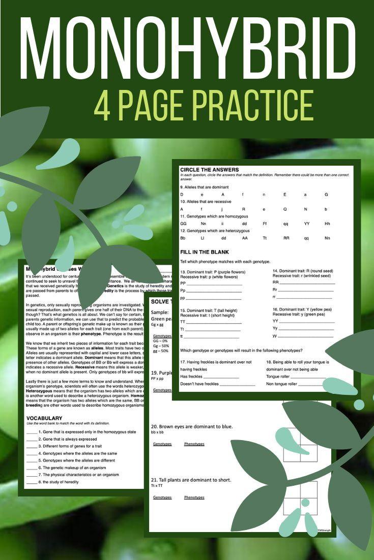 Monohybrid Cross Square Practice Worksheet
