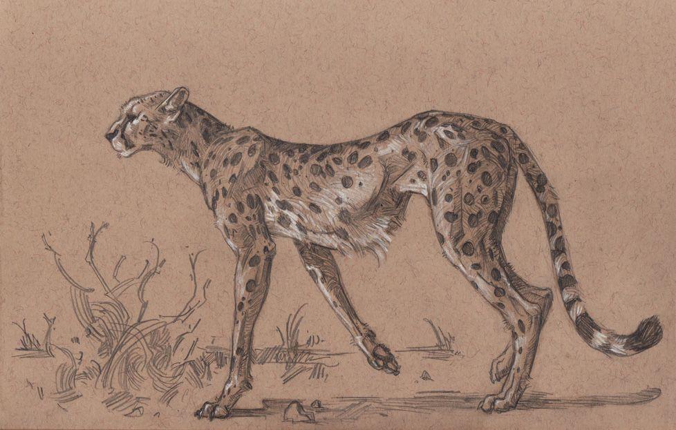 cheetahlores.jpg | inspirations | Pinterest | Draw, Animal drawings ...