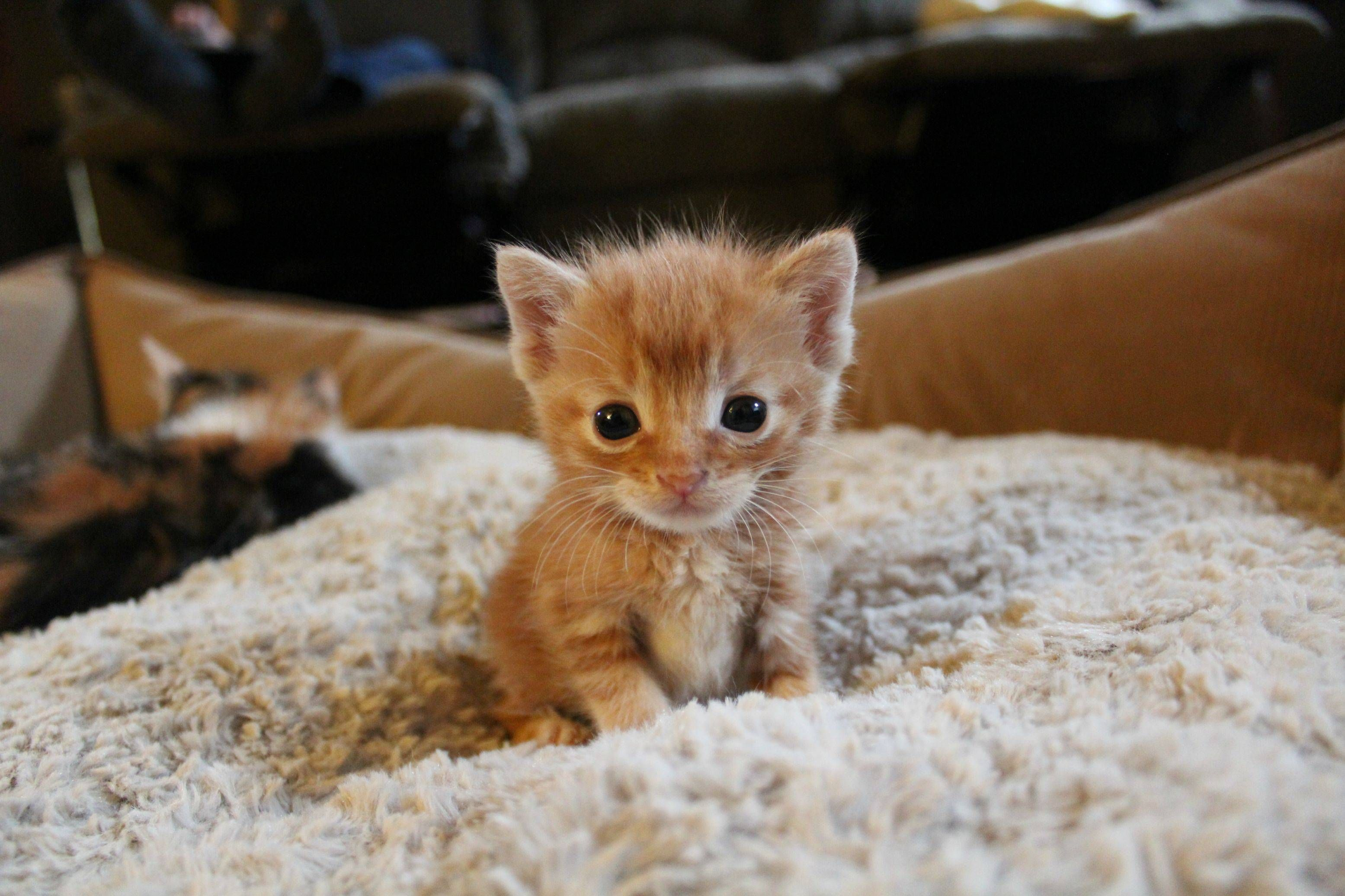 Imgur Cute Animals Baby Cats Kittens Funny