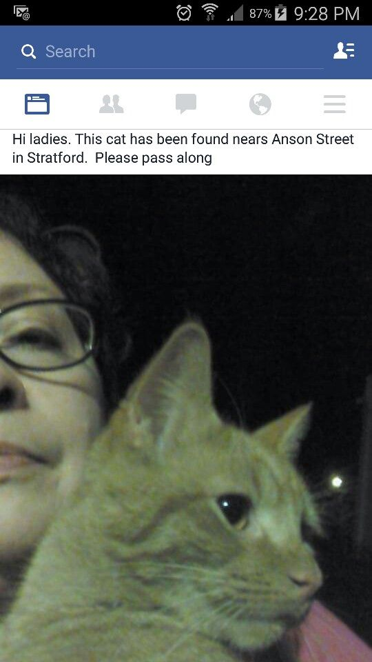 Photos From Grace Alejandra Lassnibatt Grace Alejandra Lassnibatt Ibacache Orange Tabby Found Cat Cats