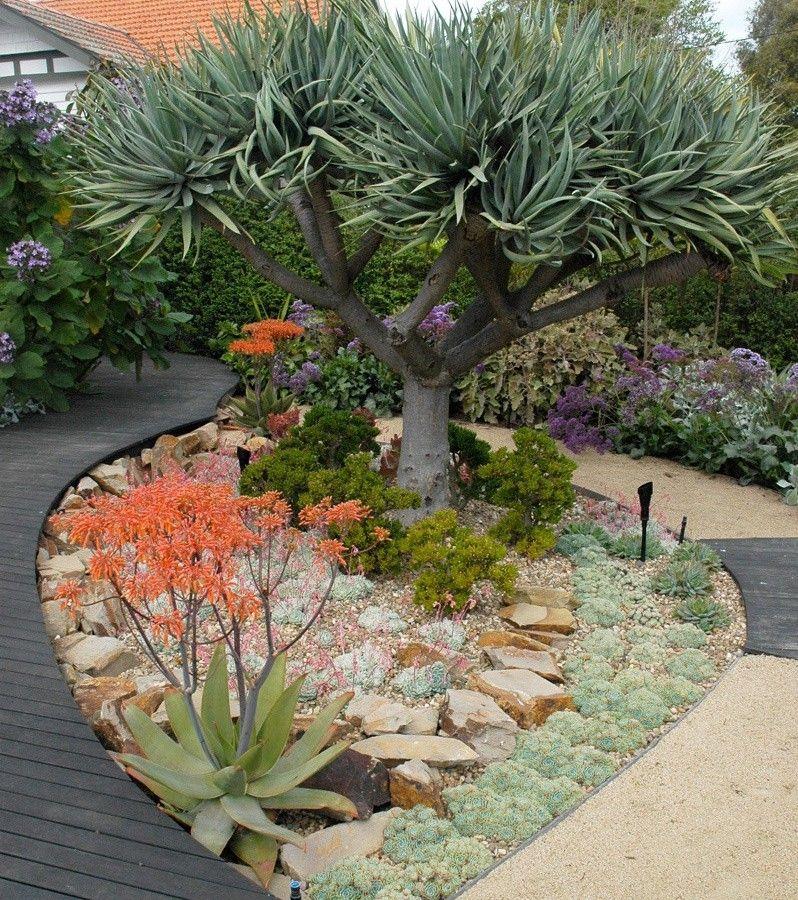 Dragon Tree Garden Inspirations Pinterest Jardines, Diseño y - paisaje jardin