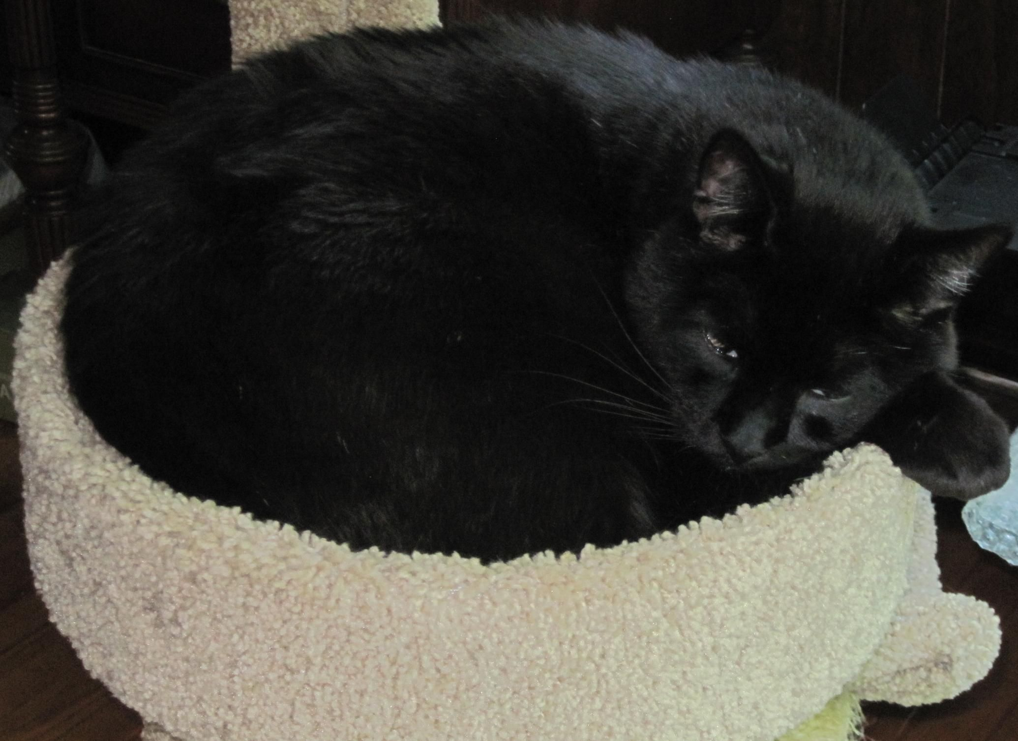 Sake DESCRIPTION large friendly neutered chipped male AREA