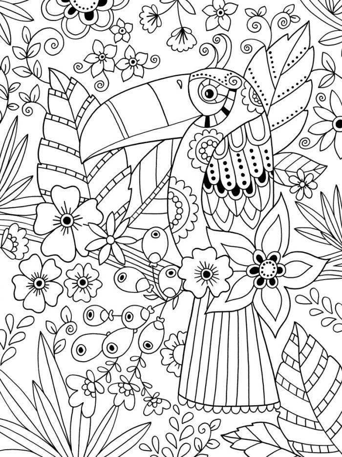 colouring toucan colorir coloriage Basit Bird coloring