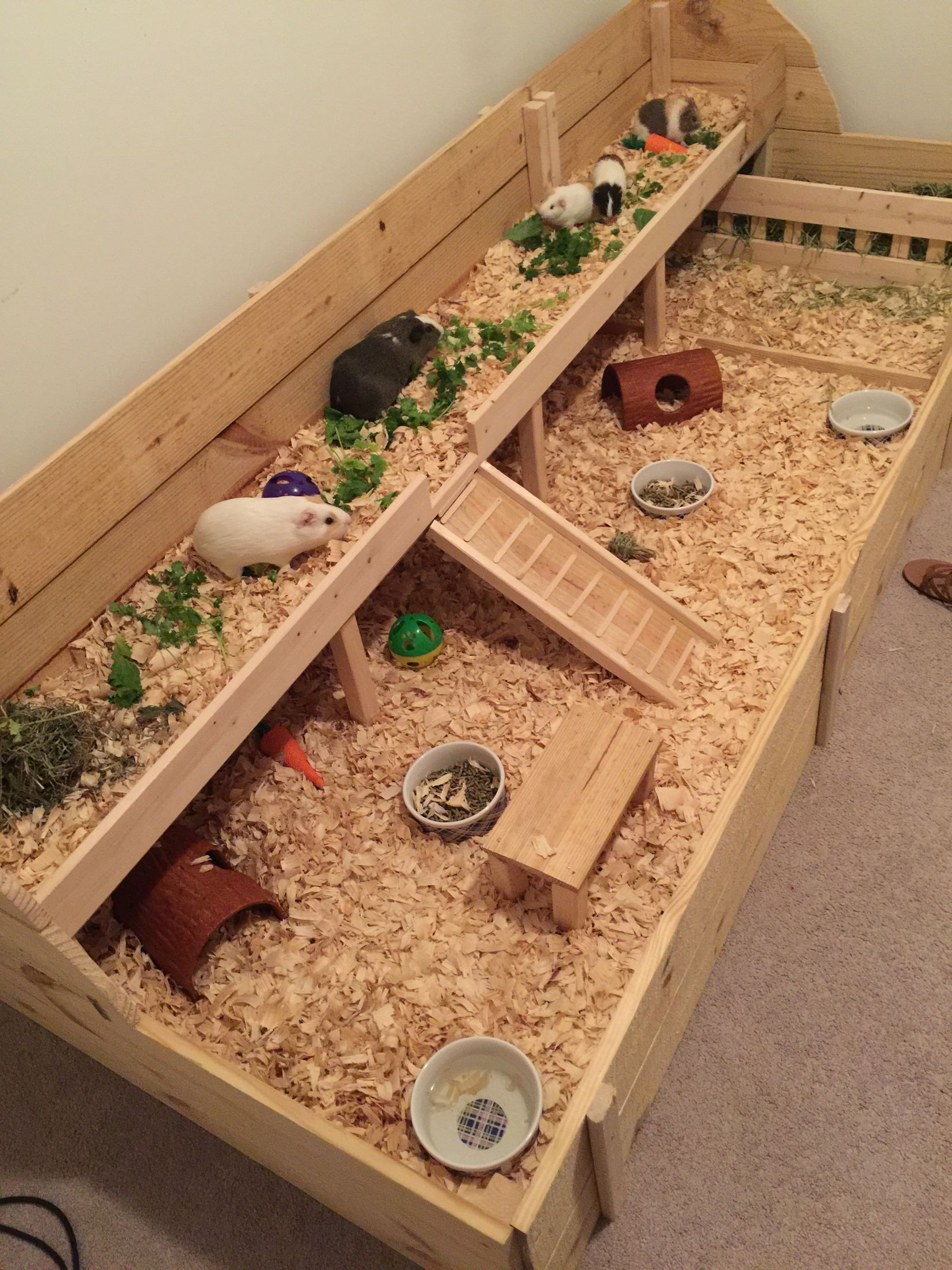 Indoor guinea pig cage custom built for the girls cage for Diy guinea pig hutch