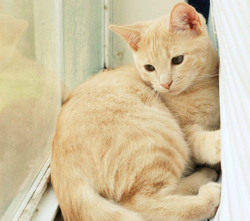 30  Beautiful Yellow Cat Breed