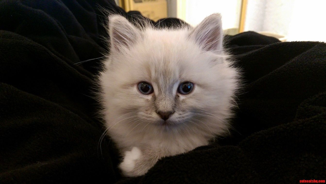 Meet link. 7 weeks old and ready to save hyrule. - http://cutecatshq.com/cats/meet-link-7-weeks-old-and-ready-to-save-hyrule/