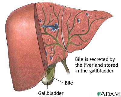 Gallbladder And Liver Diagram