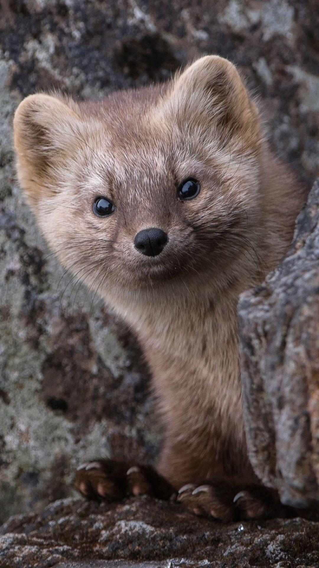 sable animal Google Search Animaux, Fourrure
