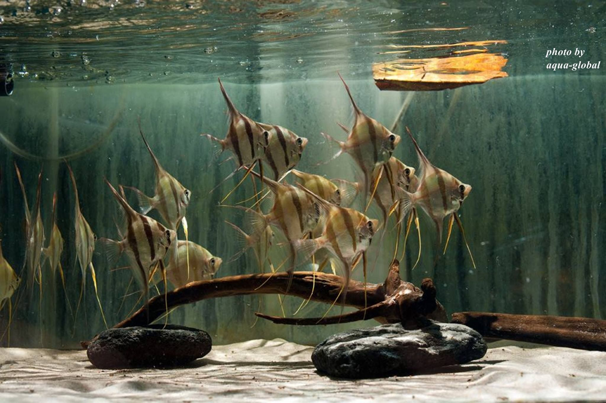 3ad963347b1fa4f8c9a87d611abcdf2c Frais De Aquarium Amazonien Concept