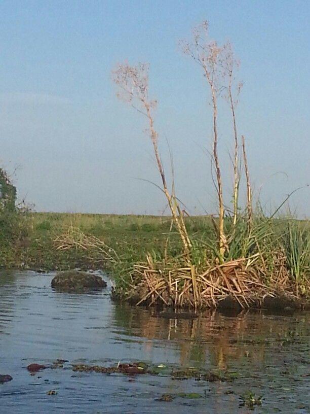 Pantanal Mato Grosso del sud brasil
