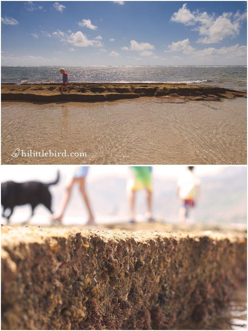 Best baby beach on Oahu : Bathtub beach | Oahu family activities ...